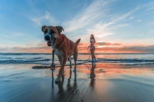 žena so psom na pláži